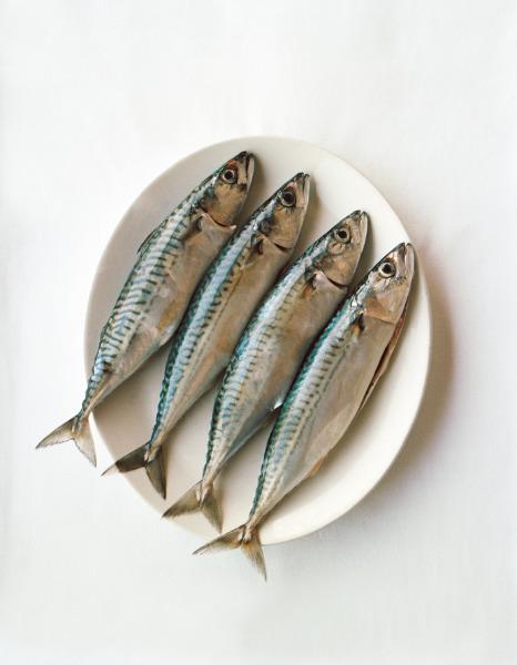 kıyı, balıkçı, restoran, istanbul